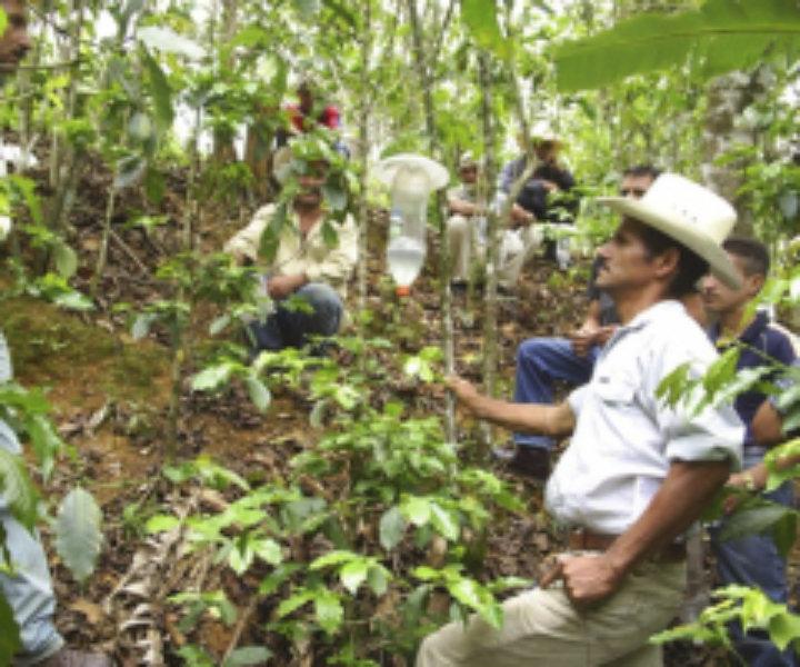 Acció Solidària de Cafès Batalla a Honduras
